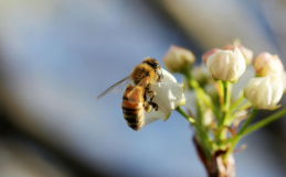 An issue that should get a little more buzz – bees!
