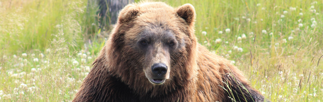 UPDATE: In Defence of a Fallen King: A critique of the BC grizzly bear scientific review